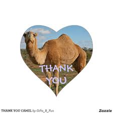 THANK YOU CAMEL
